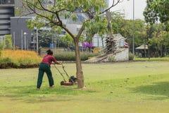 Травокосилка режа зеленую траву работа сада Стоковое Изображение RF