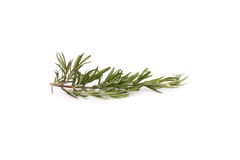 травы ароматичной предпосылки кулинарные изолировали белизну rosemary Стоковое Фото