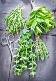 Травы ароматности стоковое изображение rf