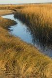 Травы болота на заходе солнца в падении на Milford указывают, Коннектикут стоковое изображение rf