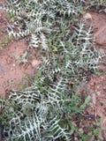 1 травы вне ksar kbir Марокко стоковое фото
