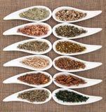 Травы волшебных и Mediicinal Стоковые Изображения RF