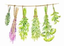 Травы высушены на строке Иллюстрация лета акварели Стоковое фото RF