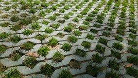 Травы в блоге Стоковые Изображения RF