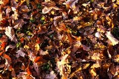 Травы в изморози Стоковые Фотографии RF