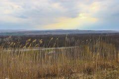 Травы в марте Стоковые Изображения RF
