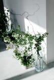 Травы в стеклянных бутылках около белой стены Тень от окна на стене белая стена и белый пол Стоковая Фотография