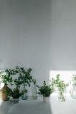 Травы в стеклянных бутылках около белой стены Тень от окна на стене белая стена и белый пол Стоковое фото RF