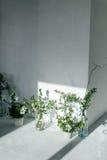 Травы в стеклянных бутылках около белой стены Тень от окна на стене белая стена и белый пол Стоковые Изображения