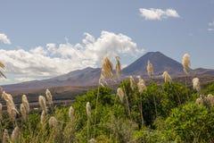 Травы дуя в ветре передний план к взгляду Tongariro Стоковое Фото