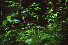 Травы леса Стоковая Фотография RF