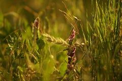 Травы лета Стоковые Изображения