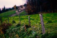 травы загородки фермы золотистые Стоковое фото RF