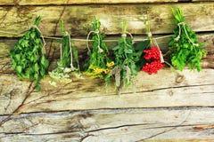 Травы засыхания. Стоковые Фотографии RF