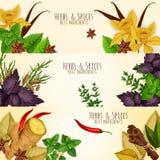 Травы, знамена вектора ингридиентов специй кулинарные Стоковая Фотография