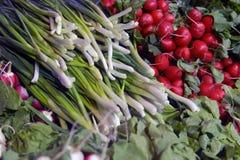 Травы и овощи Стоковые Изображения RF