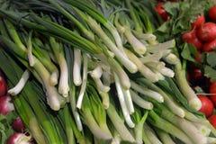 Травы и овощи Стоковые Фото