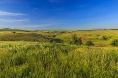 Травы и отдельные деревья на холмах в лете Стоковые Фото