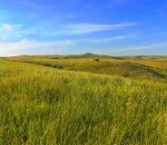 Травы и отдельные деревья на холмах в лете Стоковые Изображения RF