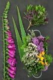 Травы и цветки для фитотерапии стоковые изображения rf