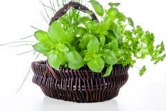 травы корзины Стоковая Фотография