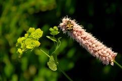 Травы лечения на солнечном свете стоковые фото