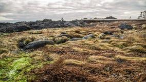 Травы моря острова ванкувер Стоковое Фото