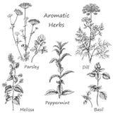 Травы нарисованные рукой ароматичные иллюстрация вектора