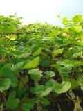 травы парника естественные Стоковая Фотография RF
