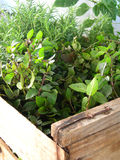травы парника естественные Стоковые Фото