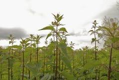 травы поля Стоковая Фотография