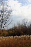 Травы прерии падения в ветре Стоковые Изображения RF