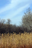 Травы прерии падения Стоковая Фотография