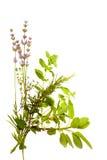 травы пука белые Стоковая Фотография
