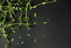 Травы тимиана Стоковое фото RF