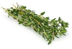 Травы тимиана Стоковая Фотография RF