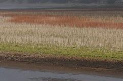 Травы луга приближают к озеру стоковое изображение rf