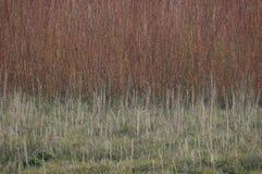 Травы лужка стоковое фото
