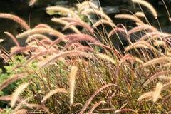 Травы флоры в ветре Стоковые Изображения
