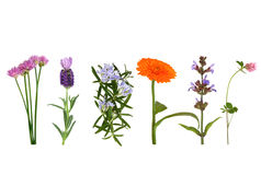 травы цветка Стоковое фото RF
