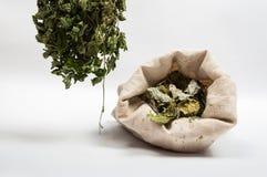 Травы чая Стоковое Изображение