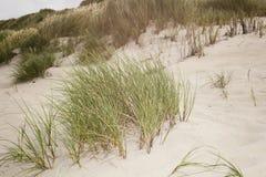Травы дюны на seashore Стоковая Фотография