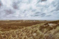 Травы дюны на seashore Стоковое Изображение RF