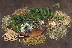 Травы для тревожности и спать разладов стоковые фото