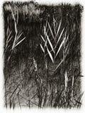 Травы Стоковая Фотография RF