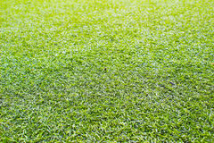 травы Стоковые Изображения
