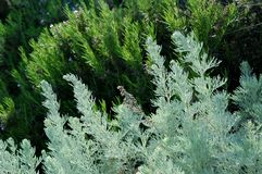 травы Стоковое Фото