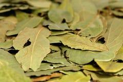 травы Стоковая Фотография