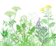 Травяная иллюстрация Стоковые Изображения RF