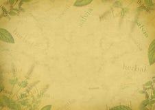 Травяная предпосылка на старой бумаге Стоковое Изображение
